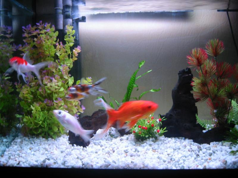 Entretien aquarium poisson 28 images fincredibles for Achat poisson rouge paris 18
